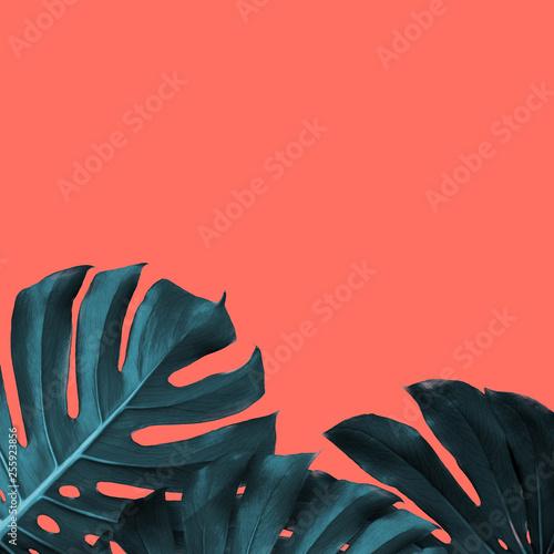 Rama tropikalni liście monstera na nowym kolorze Żywy Koralowy tło, miejsce dla teksta.