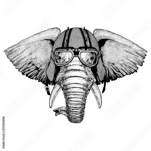 Stampa su Tela African, indian, elephant wearing a motorcycle, aero helmet