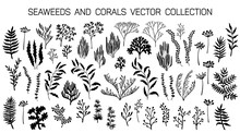 Seaweeds And Coral Reef Underwater Plans Vector Collection.