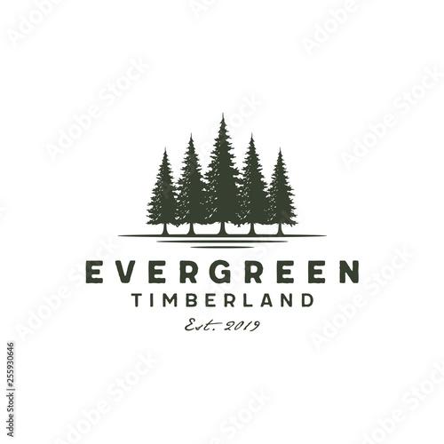 Fototapeta Rustic Retro Vintage Hemlock, Evergreen, Pines, Spruce, Cedar trees logo design obraz