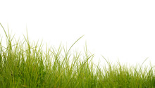 Lush Green Grass Isolated On W...