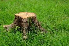 Stump On Grass Lawn