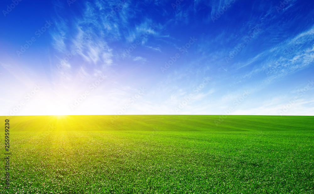 Fototapety, obrazy: Green meadow and sun.