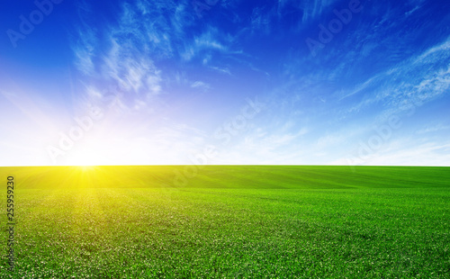 Green meadow and sun. - 255959230
