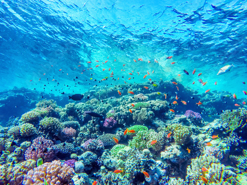 Stickers pour portes Recifs coralliens colorful coral reef and bright fish
