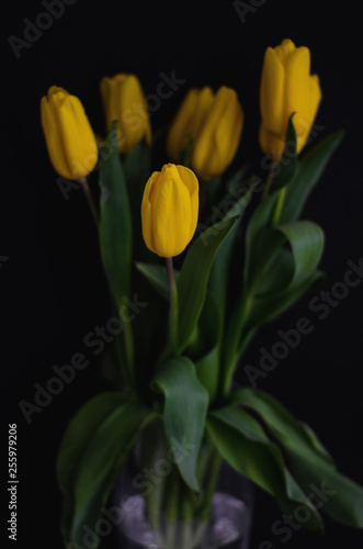 Fotografia  vase of the yellow tulips on the black background. vertical size