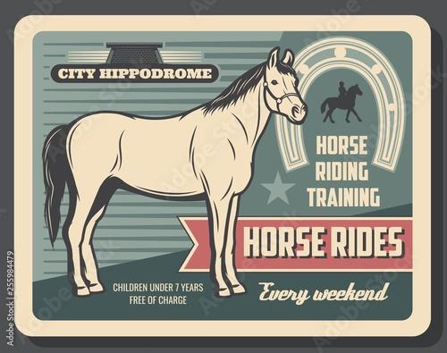 Fotografía  Equestrian sport horse riding, hippodrome