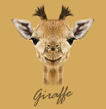 Giraffe Animal Face. Vector Cute Head Of African Giraffe. Realistic Savannah Wild Fur Giraffe Portrait Isolated On Tan Background.