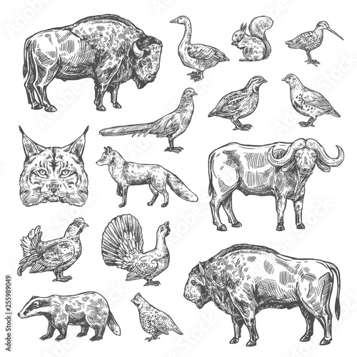 Canvas Print Isolated wild animals and birds, vector