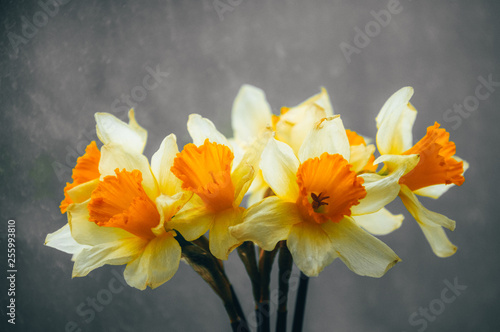 Garden Poster Narcissus flowers daffodils in a vase