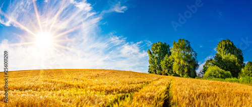 Leinwand Poster Summer landscape with golden cornfield and bright sun
