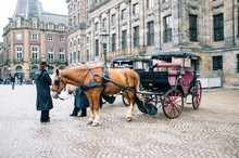 Horse And Carriage In Amsterdam