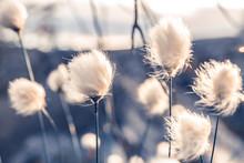 Wild Flowers Of Willow