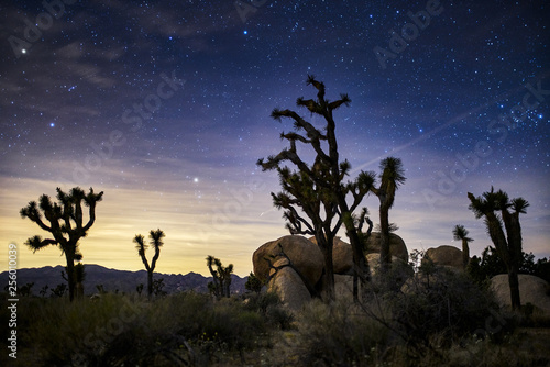 stars in the sky at joshua tree national park