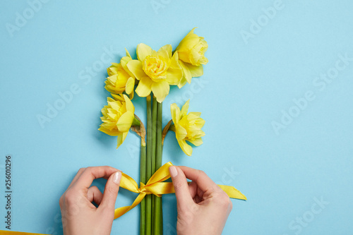 Fotobehang Narcis cropped view of woman tying bouquet of yellow narcissus flowers with yellow ribbon on blue