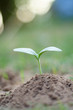 Seeds plant trees, small trees, green trees, do not focus on objects.