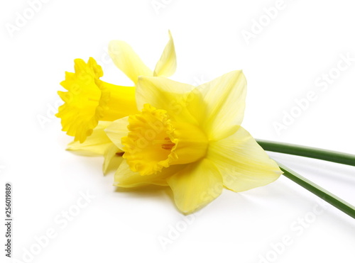 Papiers peints Narcisse Blooming narcissus flower isolated on white background