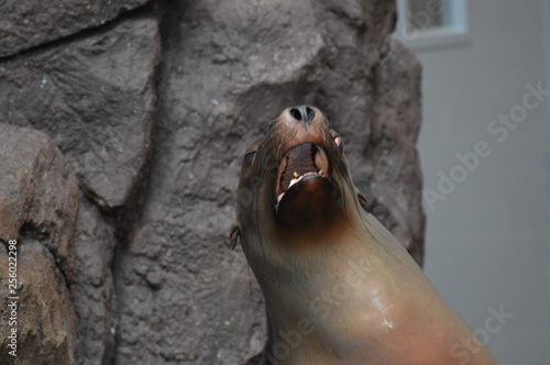 Photo  Close up of a seal