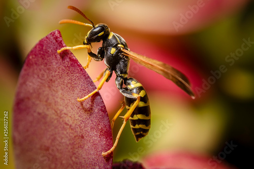 Paper wasp close up Canvas-taulu
