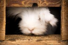 White Rabbit In Brown Wooden C...