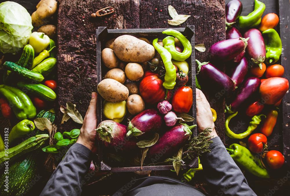 Fototapety, obrazy: Farmer with zucchini