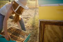Woman Beekeeper Lifts Bee Hive...