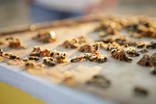 Close Up Of Bees Working On Ho...