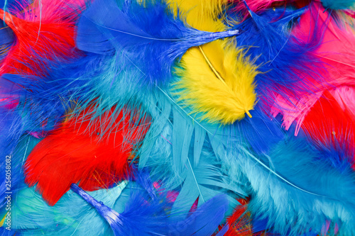 Fotografia  Bright and colourful feathers arranged on a white background