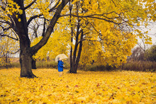 Young Child Standing Under Umbrella In Field Of Golden Autumn Leaves