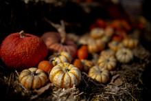 View Of Pumpkins For Halloween