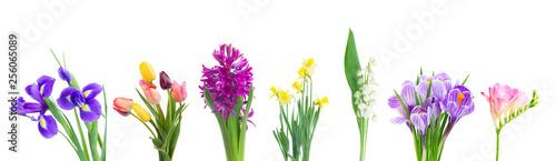 Photo  violet hyacinth flowers
