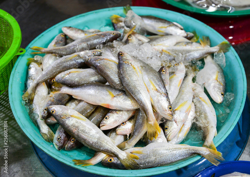 Valokuva  Fresh fish in ice bucket for sale in the seafood market / sea fish yellow tail