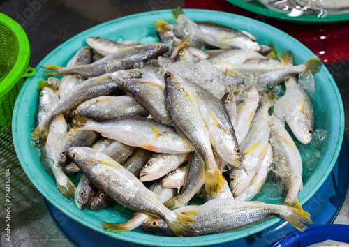 Fotografija  Fresh fish in ice bucket for sale in the seafood market / sea fish yellow tail