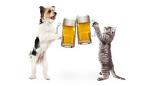 Dog And Cat Celebrating With B...