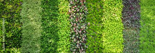 Papiers peints Jardin Eco green plant background