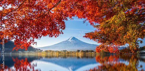 Garden Poster Cuban Red Colorful Autumn Season and Mountain Fuji with morning fog and red leaves at lake Kawaguchiko is one of the best places in Japan