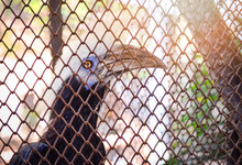White Crowned Hornbill Bird Sitting On Tree Branch In Cage Zoo In The National Park