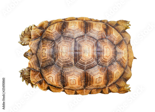 armature turtle isolated / tortoise shell pattern beautiful isolated on white ba Canvas Print