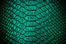 Close Up Of Green Luxury Snake Skin Texture