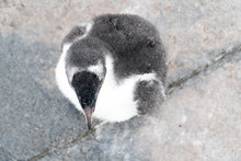 Penguin From Above