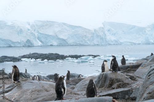 Ingelijste posters Antarctica Penguins in Antarctica