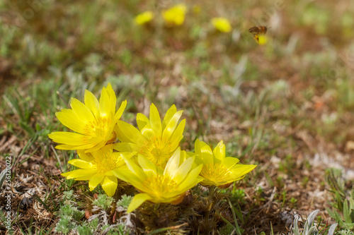 Photo Spring flowers in the meadow