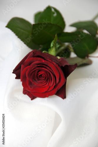 Fotografie, Obraz  一輪の赤いバラの花