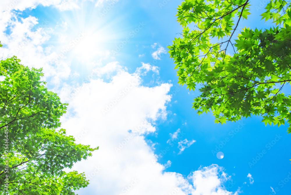Fototapeta 青空と太陽と新緑