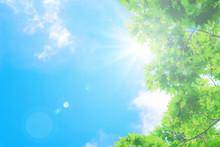 太陽と新緑