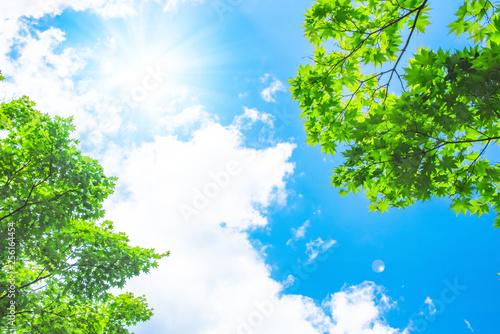 Fototapeta 青空と太陽と新緑 obraz