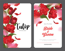 Blooming Beautiful Red Tulip F...