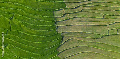 Foto auf AluDibond Grun View from above, stunning aerial view of a spectacular green rice terrace field which forms a natural texture on the hills of Luang Prabang, Laos.