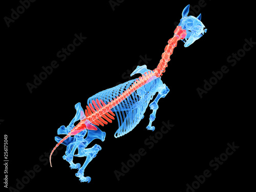 Fotografía  3d rendered medically accurate illustration of a horse spine