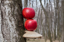 Colored Apples On A Tree , Oys...